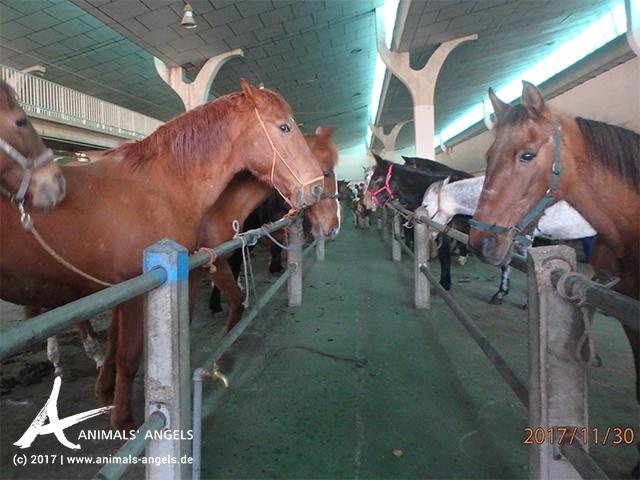 Pferdemarkt Léon, Spanien