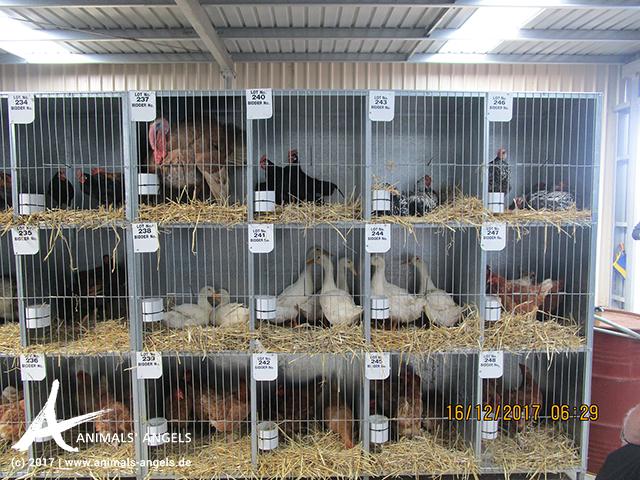 Käfige auf dem Tiermarkt Tarameade, Australien