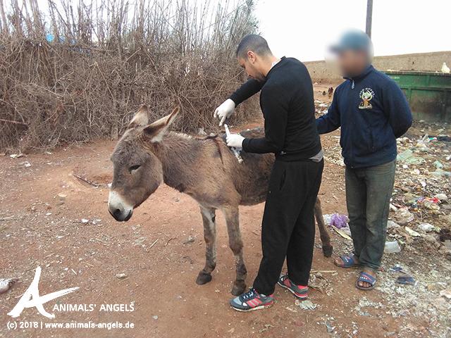 Unser Team in Marokko macht Hausbesuche bei Esel Michel und versorgt seine Wunden