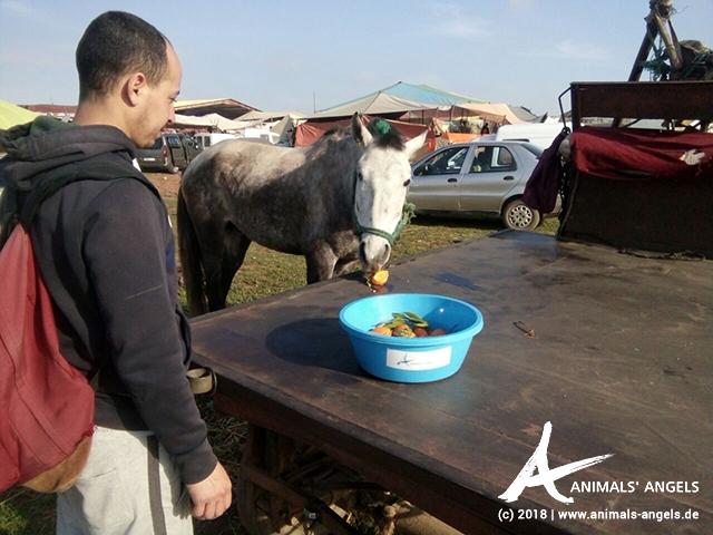 Boubaker versorgt die Tiere auf dem Markt von Mers El Kheir in Marokko