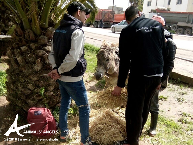 Animals' Angels im Einsatz für die Tiere in Skherat, Marokko