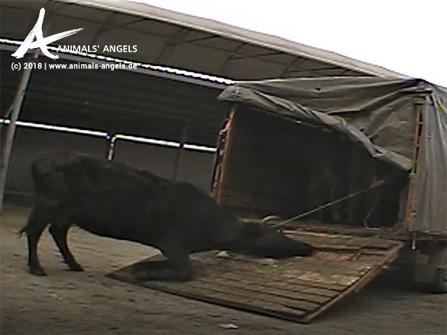 Beschwerde Tiermärkte Bulgarien