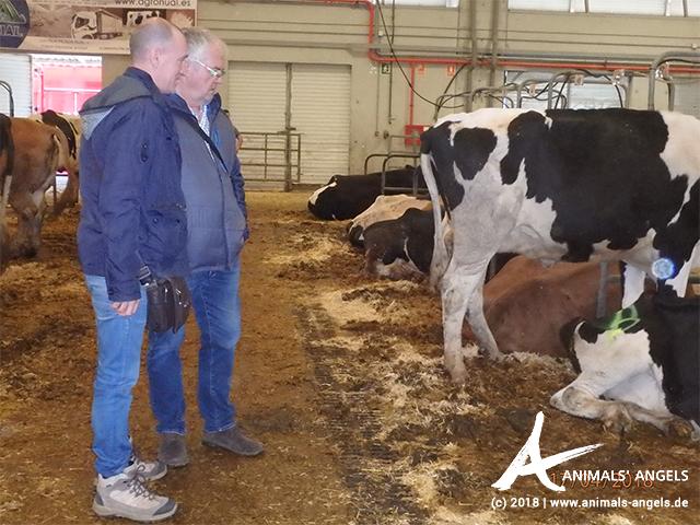 Kontrolle auf dem Rindermarkt in Silleda, Spanien