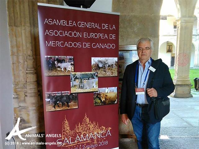 Alexander Rabitsch im Auftrag von Animals' Angels auf dem Jahrestreffen des Europäischen Tiermärkteverbandes