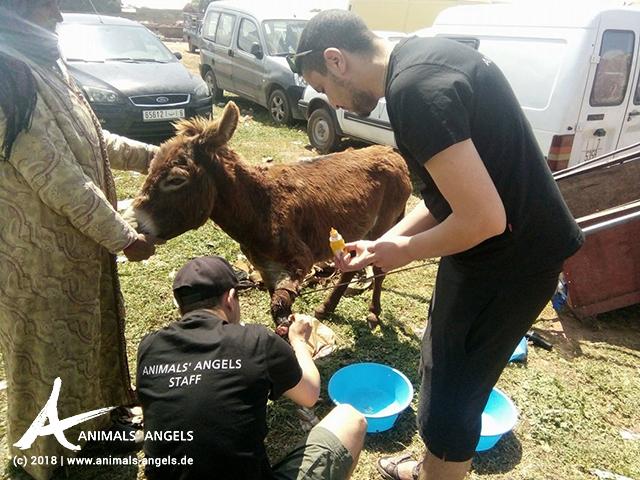 [Translate to englisch:] Animals' Angels im Einsatz auf dem Tiermarkt von Mers El Kheir, Marokko