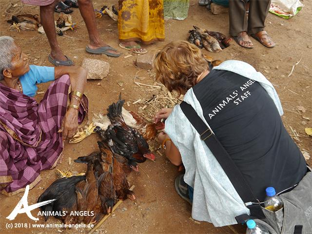Sophie tränkt die Hühner auf dem Tiermarkt