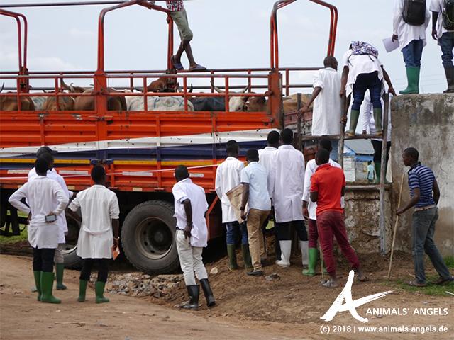 Tierschutz Tansania