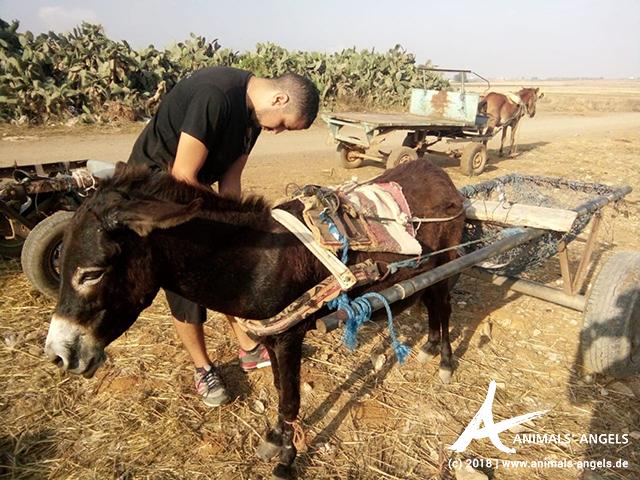 Animals' Angels im Einsatz für die Tiere in Marokko