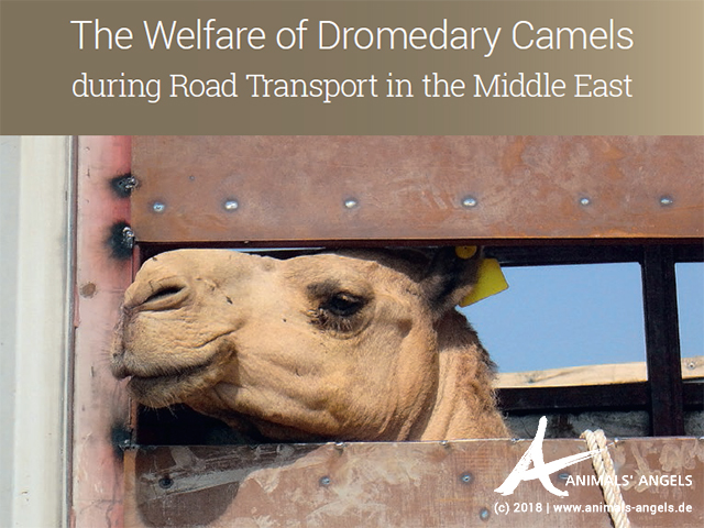 Kamelbericht